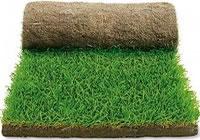 Спортивная натуральная трава